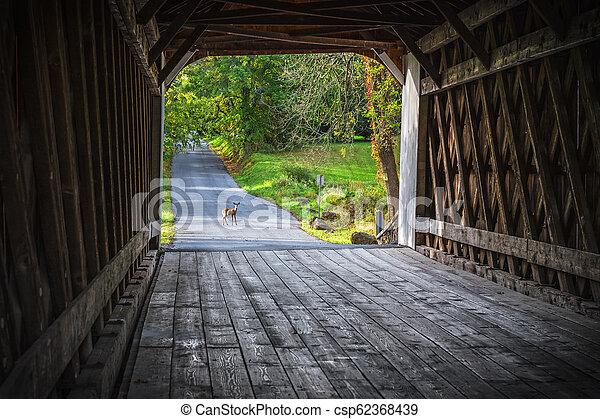 Ciervo de puente cubierto - csp62368439