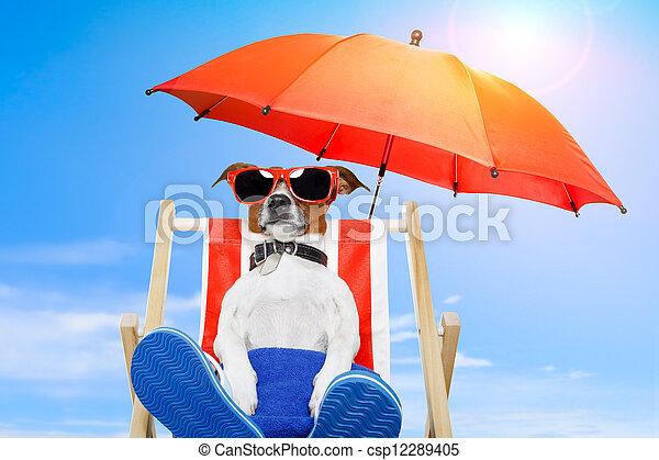 Vacaciones para perros de verano - csp12289405