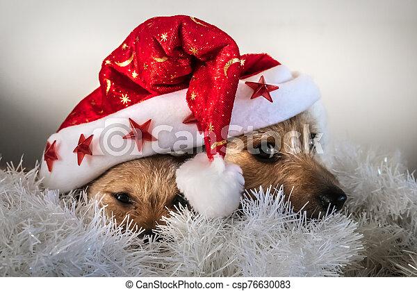 debajo, rojo, navidad, juego, perritos, sombrero - csp76630083