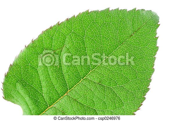 Det de hoja verde y vívida - csp0246976