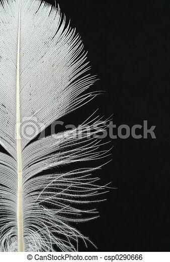 Detalles de plumas en B - csp0290666