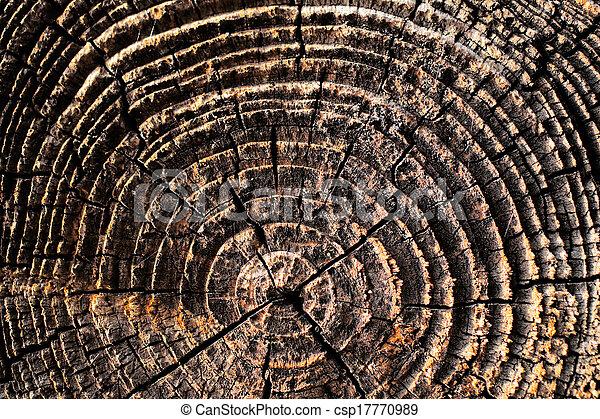 Detalles naturales de madera seca - csp17770989