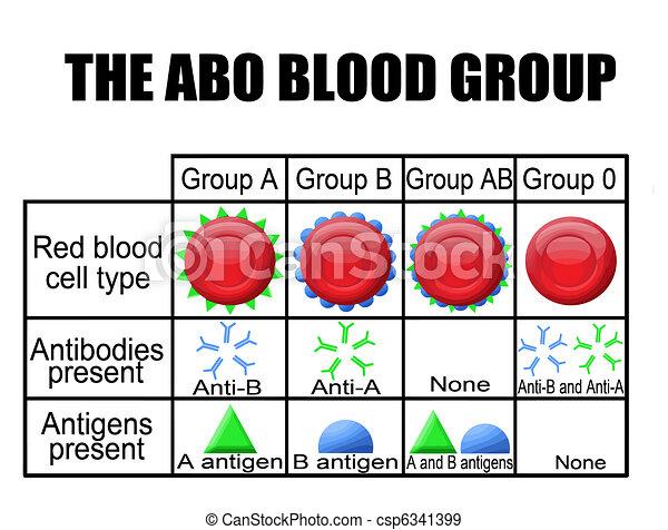 El diagrama del grupo ABO - csp6341399