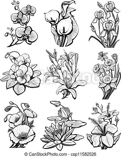 Un conjunto de bocetos de flores - csp11582526