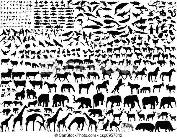 Diferentes animales - csp6957842