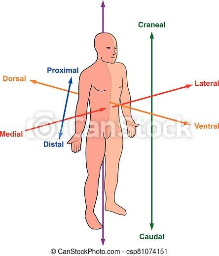 direcciones, corporales - csp81074151