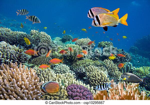 Disparos de coral vívidos con peces - csp10295667