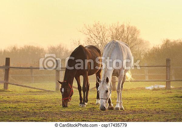 Dos caballos en el rancho - csp17435779