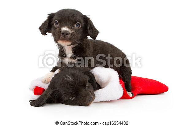 Dos cachorros de Navidad - csp16354432