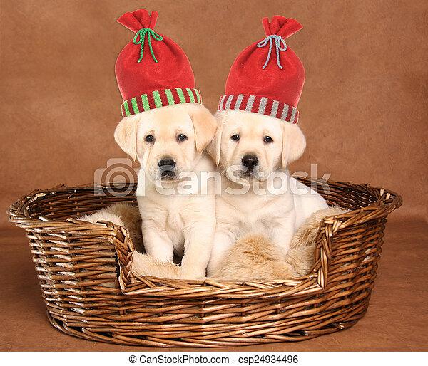 Dos cachorros de Navidad - csp24934496