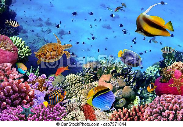 Foto de una colonia de corales en un arrecife, Egipto - csp7371844