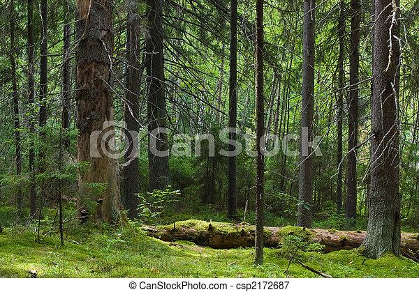 El bosque misterioso - csp2172687