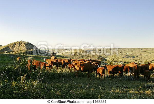 El ganado está listo - csp1468284