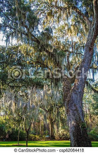El musgo español en el parque iluminado por el sol - csp62084418