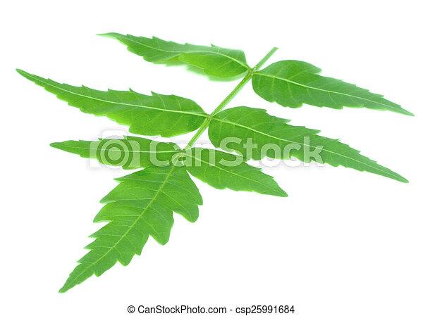 El neem medicinal se va - csp25991684