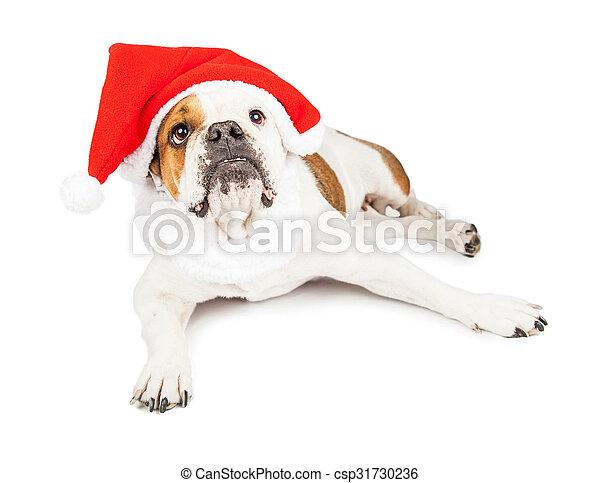 El perro de Papá Noel mirando hacia arriba - csp31730236