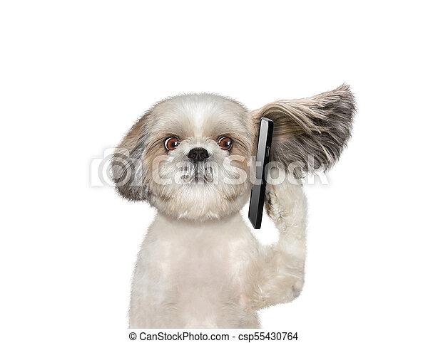 El perro está hablando por teléfono - csp55430764