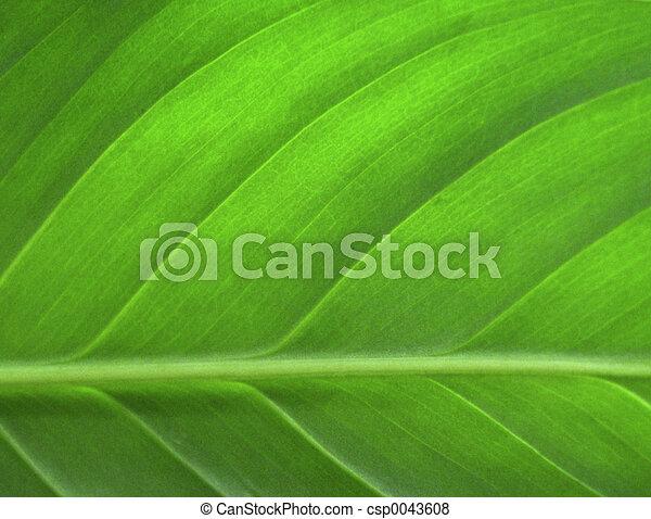 El primer plano de la hoja verde - csp0043608