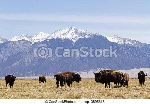 El rancho Buffalo - csp13895615