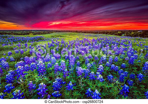 Sunset en Sugar Ridge Road, Ennis, TX - csp26800724