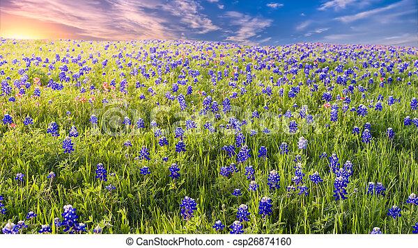 Sunset en Sugar Ridge Road, Ennis, TX - csp26874160