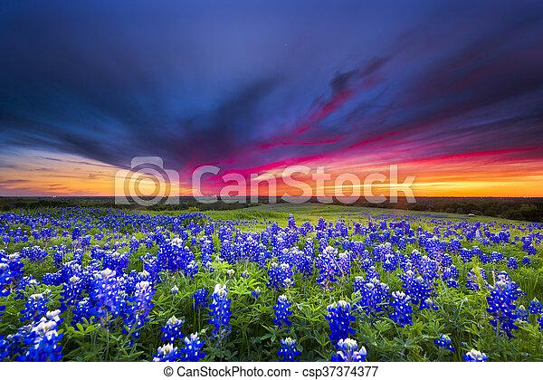 Sunset en Sugar Ridge Road, Ennis, TX - csp37374377