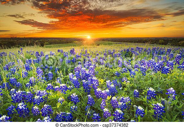 Sunset en Sugar Ridge Road, Ennis, TX - csp37374382