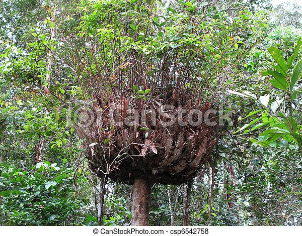 Epifito en un árbol en la selva tropical - csp6542758