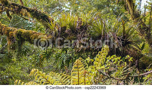 Epyfites en una rama de árbol en la húmeda selva tropical de Te Urewera - csp22243969
