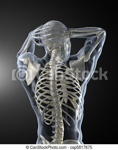 Escaneo médico humano de espalda - csp5817675