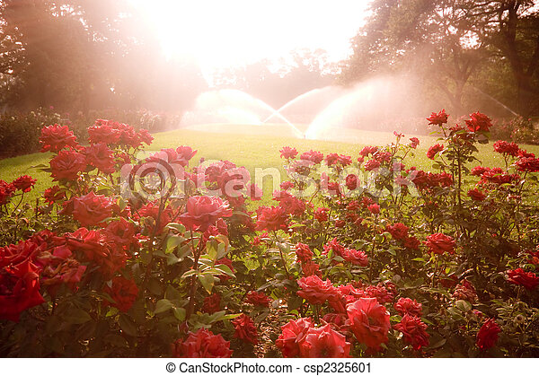 Escena encantada con rosas - csp2325601