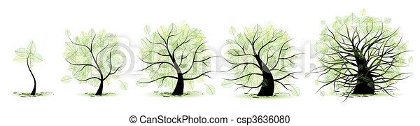 Escenas de la vida del árbol: infancia, adolescencia, juventud, adultez, vejez - csp3636080