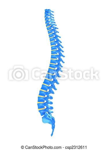 La espina humana - csp2312611