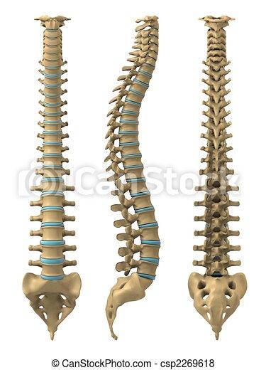 La espina humana - csp2269618