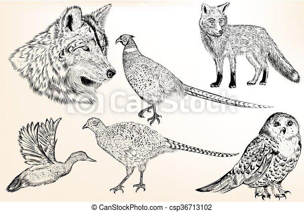 Colección de animales dibujados a mano de vector en un estilo vintage grabado para diseño - csp36713102