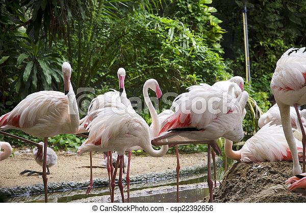 Pájaros flamencos - csp22392656