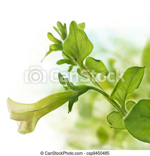 La primera flor de petunia pendula sobre verde y blanco fondo, elemento de diseño para la frontera de una página - csp9450485
