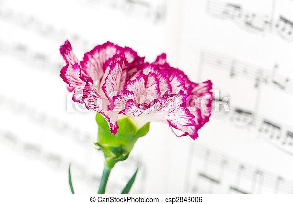 Flor de clavel rojo en la página de notas musicales - csp2843006