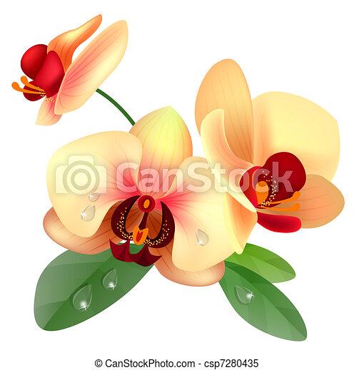 Flor de orquídea - csp7280435