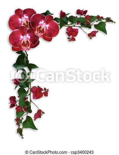 Orquídeas y bougainvillea frontera floral - csp3400243