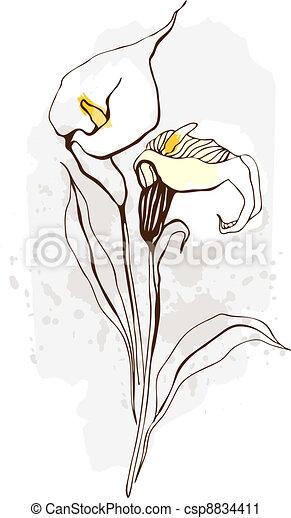 Calla. Ilustración floral de flores florecientes - csp8834411