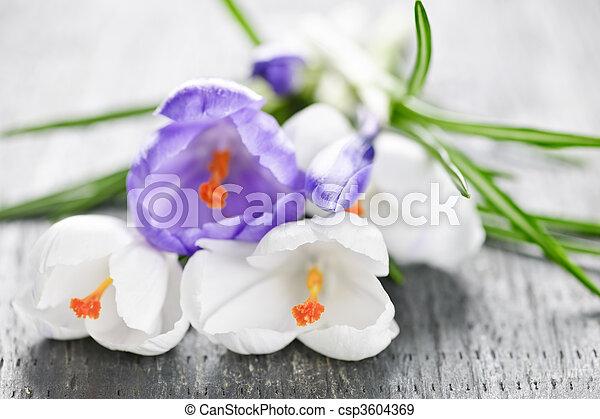 Flores de cocodrilo de primavera - csp3604369