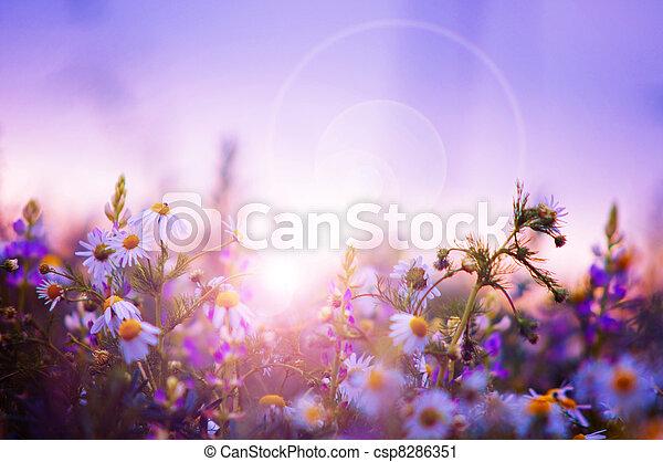 Campo de flores primavera - csp8286351