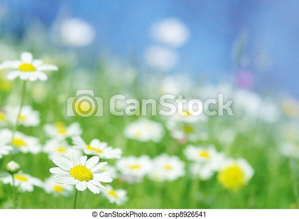 Flores de primavera - csp8926541
