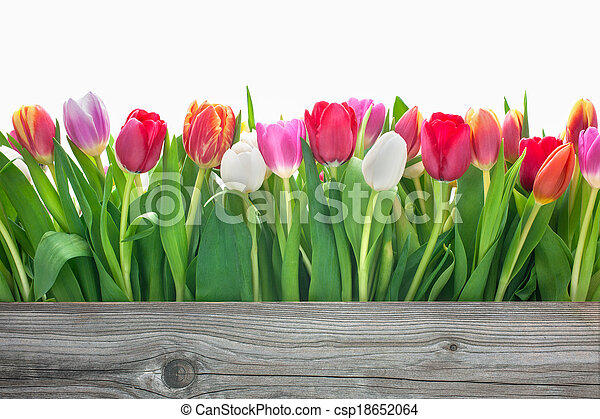 Las flores de primavera - csp18652064