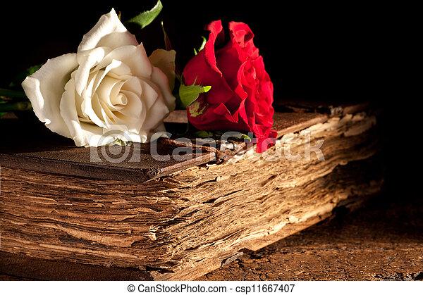 Flores en libros antiguos - csp11667407