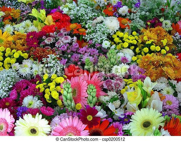 Flores de exposición - csp0200512