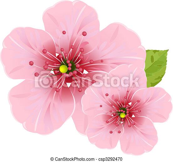 Flores de cerezo - csp3292470