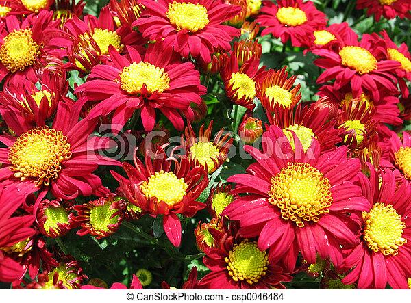 Flores - csp0046484