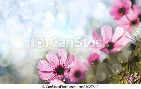 Flores - csp34027642